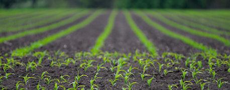 iowas_corn_planting_window_closing_1_634720646406876000